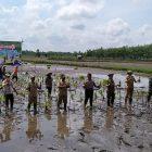Dinas Pertanian Kapuas Luncurkan Padi IPB 1R Dadahup